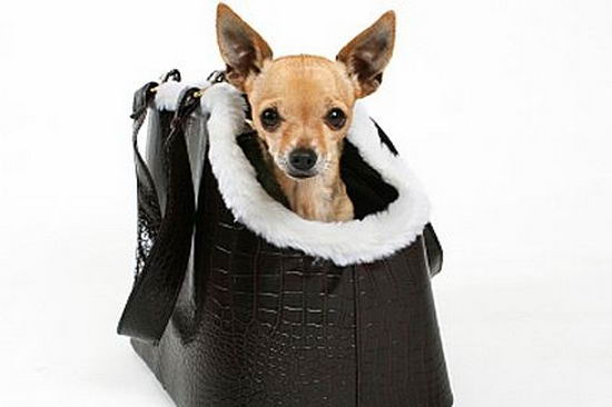 make-holiday-travel-arrangements-pets